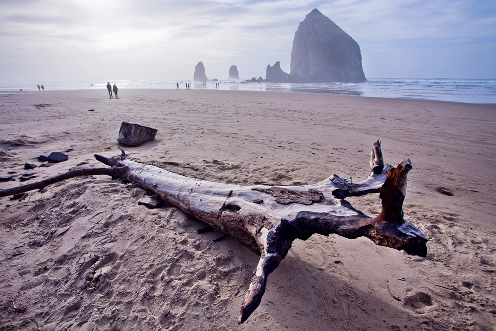 A large piece of driftwood sitting in front of Haystack Rock on a hazy day at Cannon Beach, Oregon.