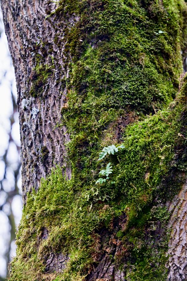 Tree Texture 04