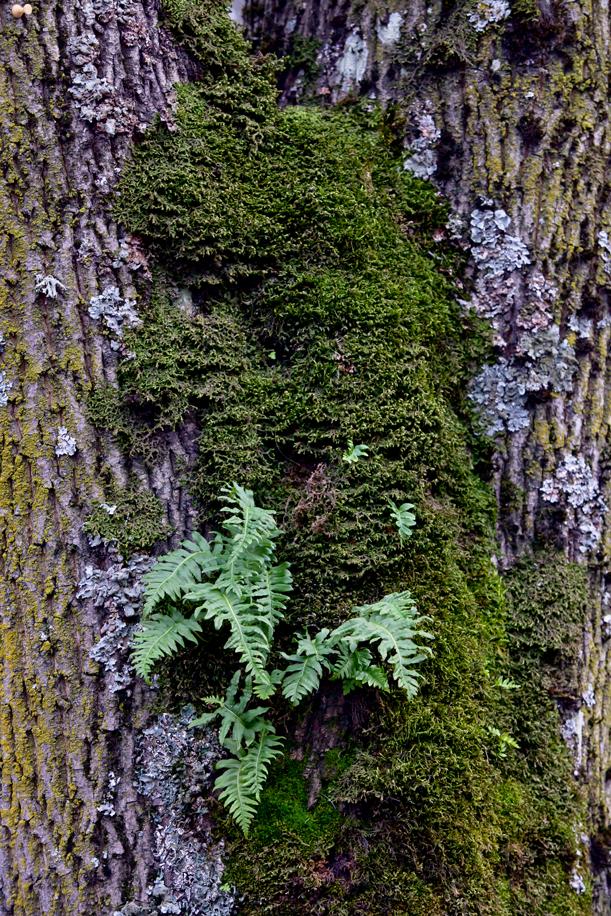 Tree Texture 03