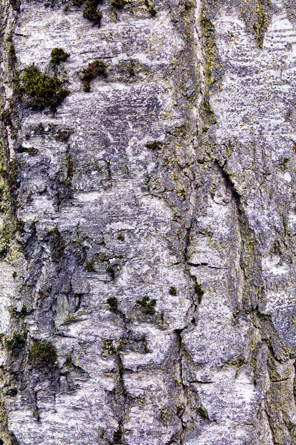 Tree Texture 05