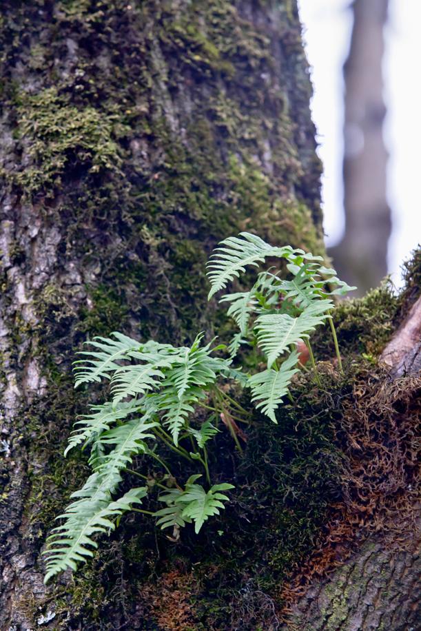 Tree Texture 07