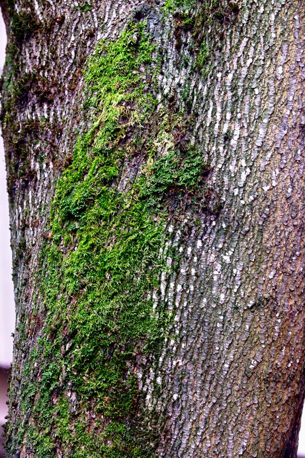 Tree Texture 08