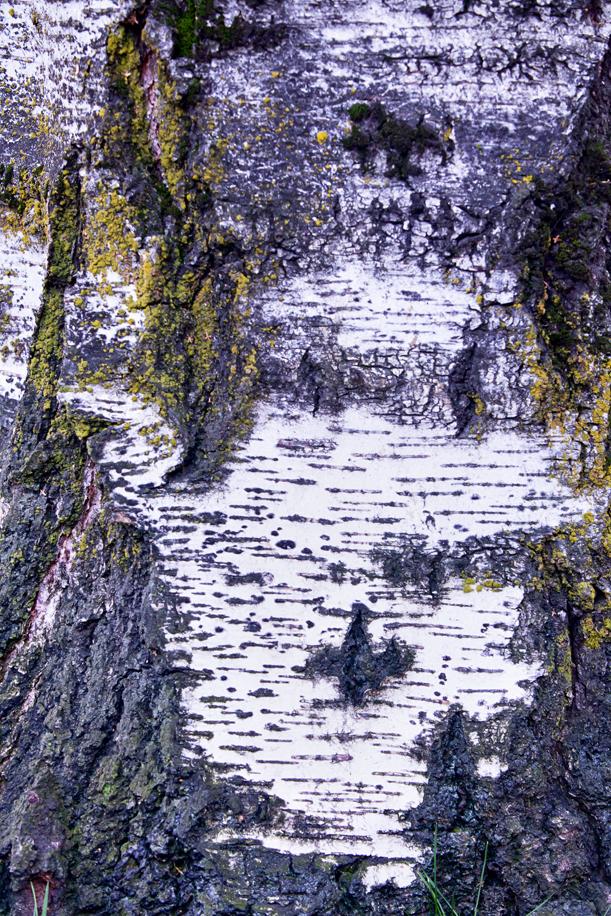 Tree Texture 02