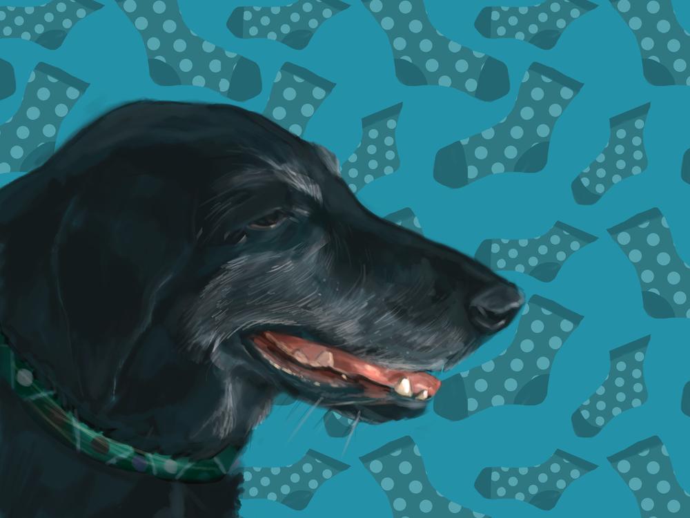 Jack the Dog