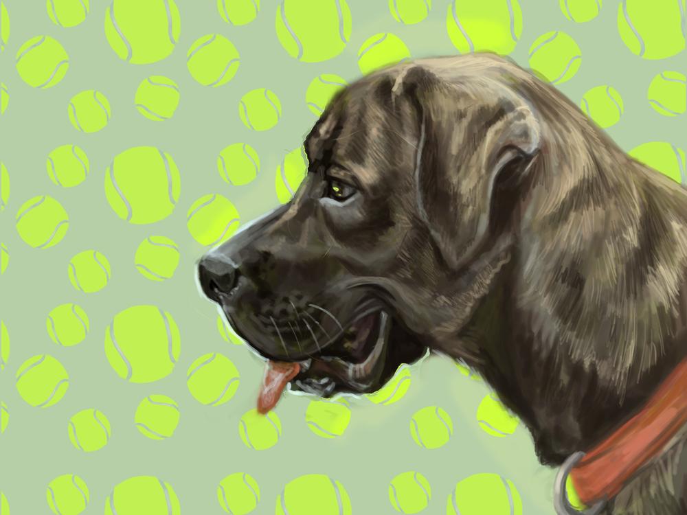 Hudson the Dog.