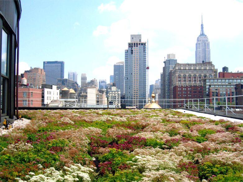 colorful garden urban.jpg
