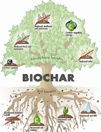 biochar tree.jpg