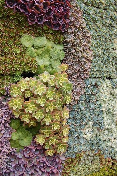 great shot of succulents on a wall.png
