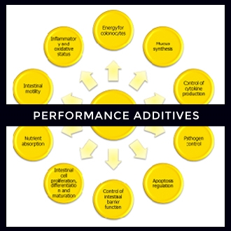 Performance Additives.jpg