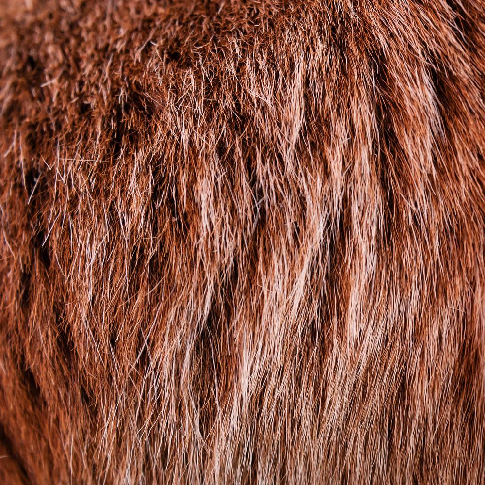 goat hair