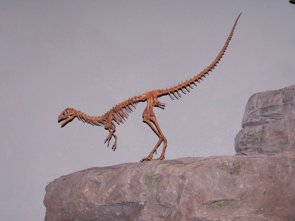 Compsognathus dinosaur Compsognathus longipes