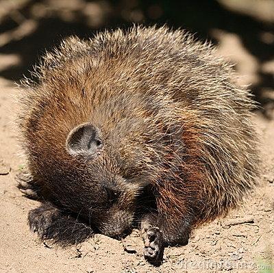 groundhog digging.jpg