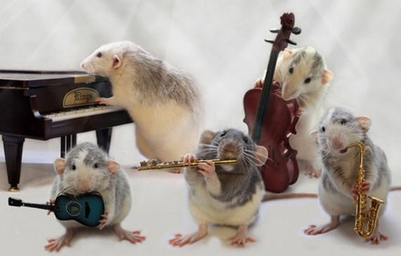 Dumbo Rats Playing Tiny Instruments. CREDIT: INCREDIBLE THINGS