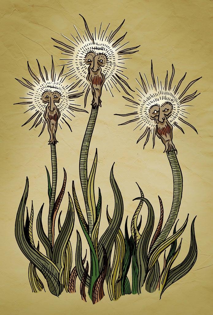 mrtaylor-triplets.jpg