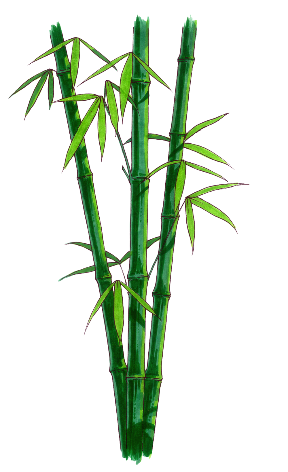 Bamboo 1 - No Background.png