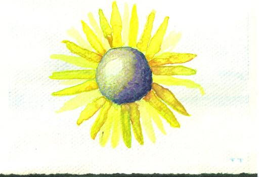PJ - Sunflower.jpg
