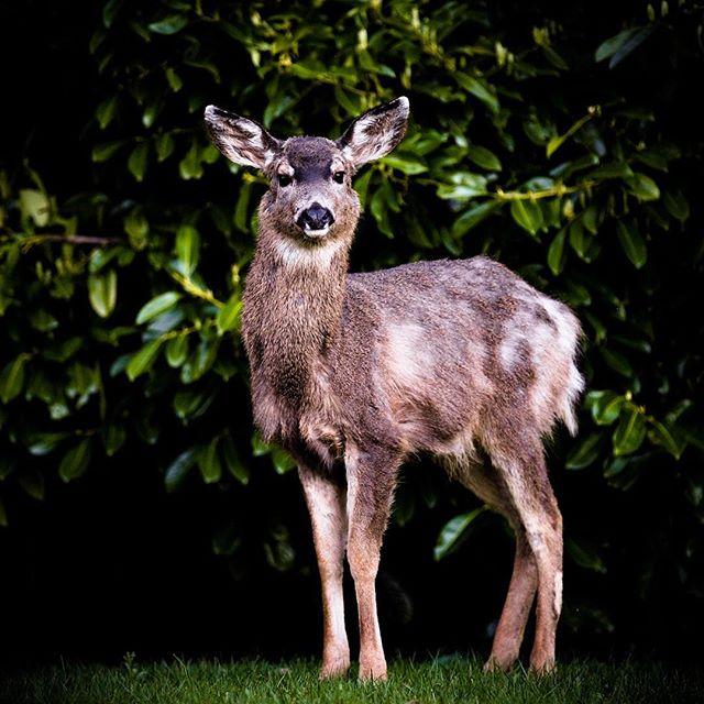 I found a deer! #igdaily #photooftheday #photographyislifee #naturephotography #instamood