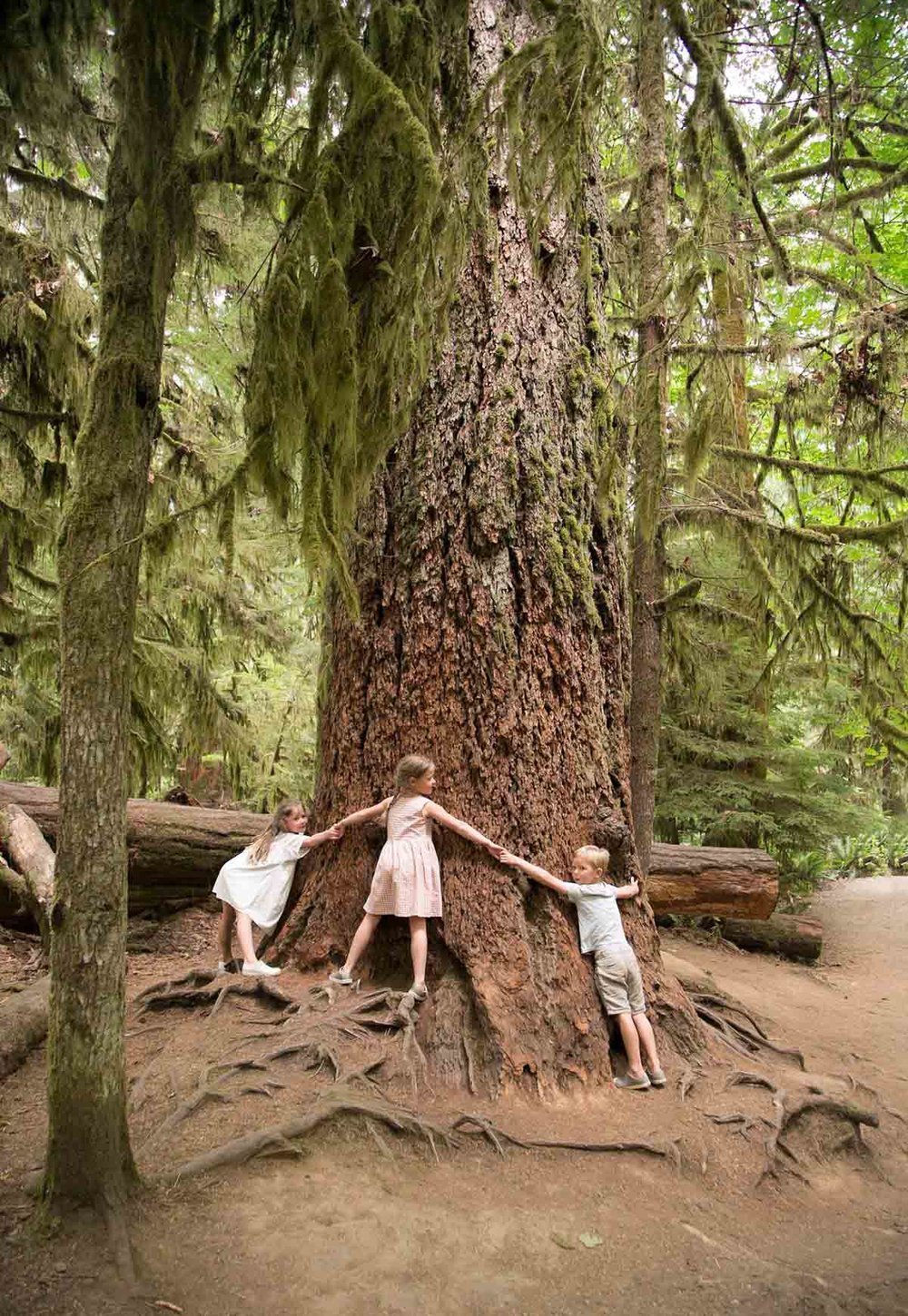 cathedral grove british columbia canada