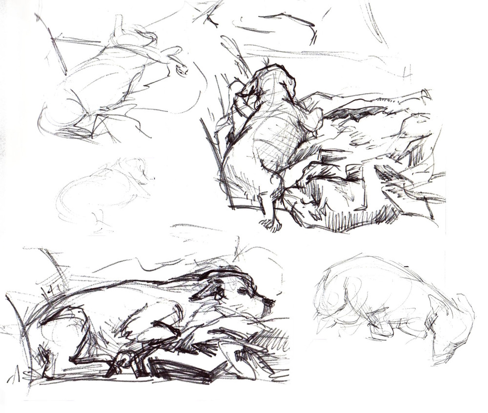 sburtner_dog sketches.jpg