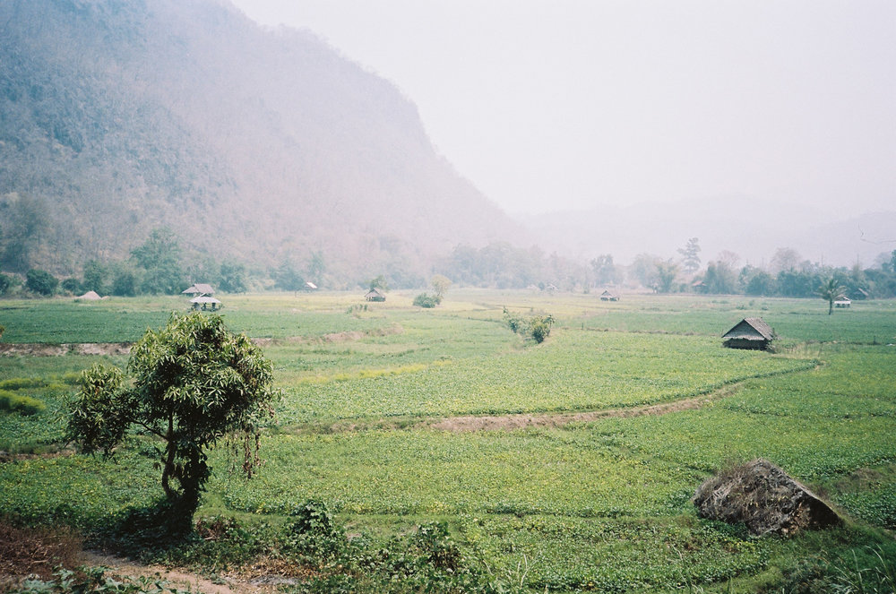 thailandricefield.jpg