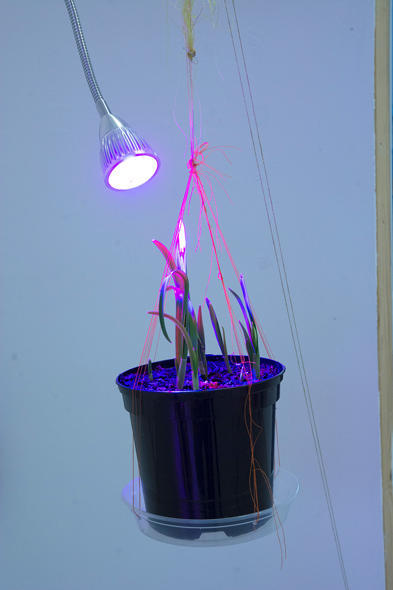 Kelly M O'Brien,  Galanthus (Spring is Coming) , detail. Steel, wood, thread, tulle, tape, foam pipe insulation, plastic, cast cement, ceramic tiles, plants, soil, grow lamps, glass. 166 x 217 x 74 cm. ©2019