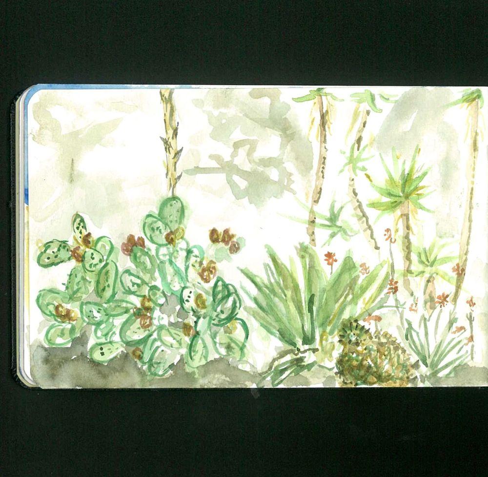 succulent garden, san francisco botanical garden