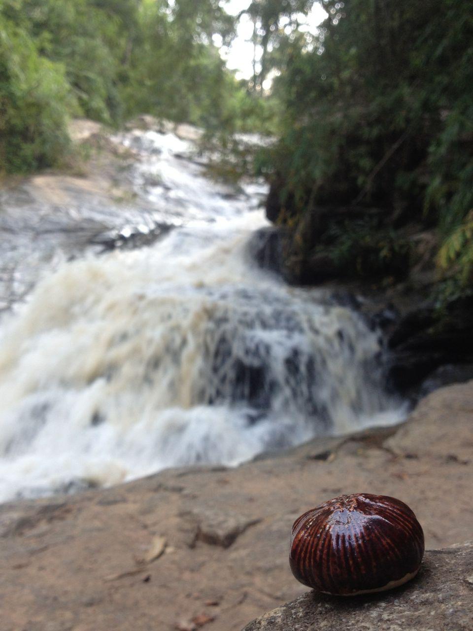mae sa waterfall . mae rim . thailand 06.10.14