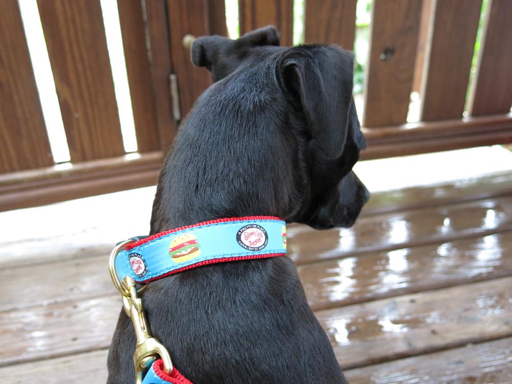 skinny dog collar 1.jpg