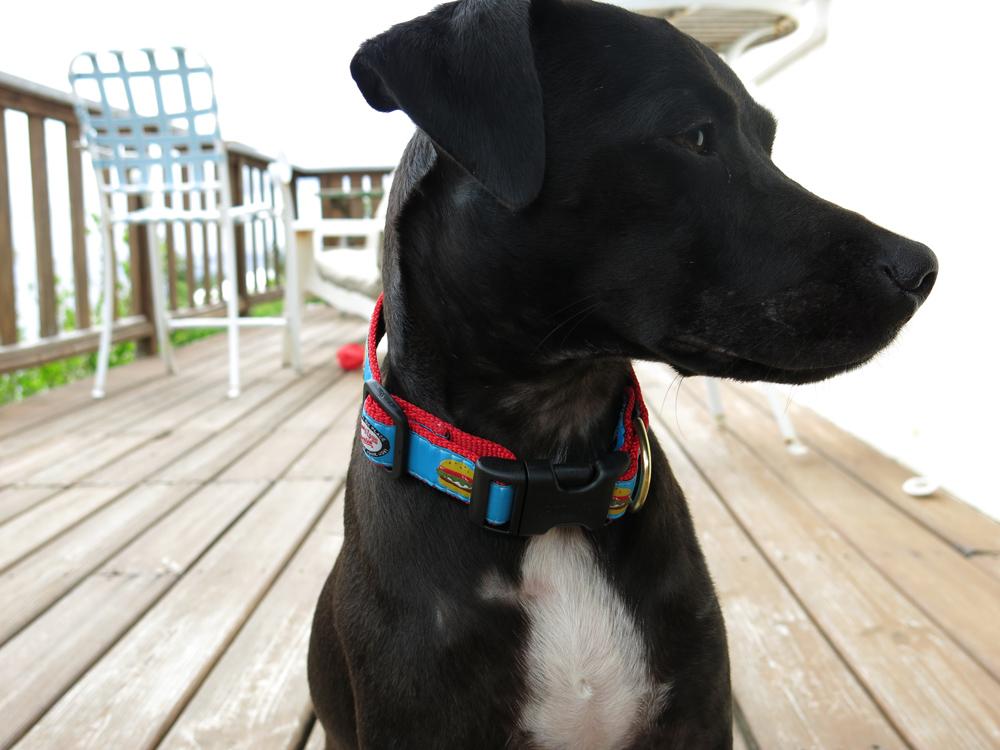 skinny dog collar 2.jpg