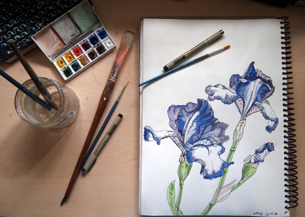 IrisesDrawing.jpg
