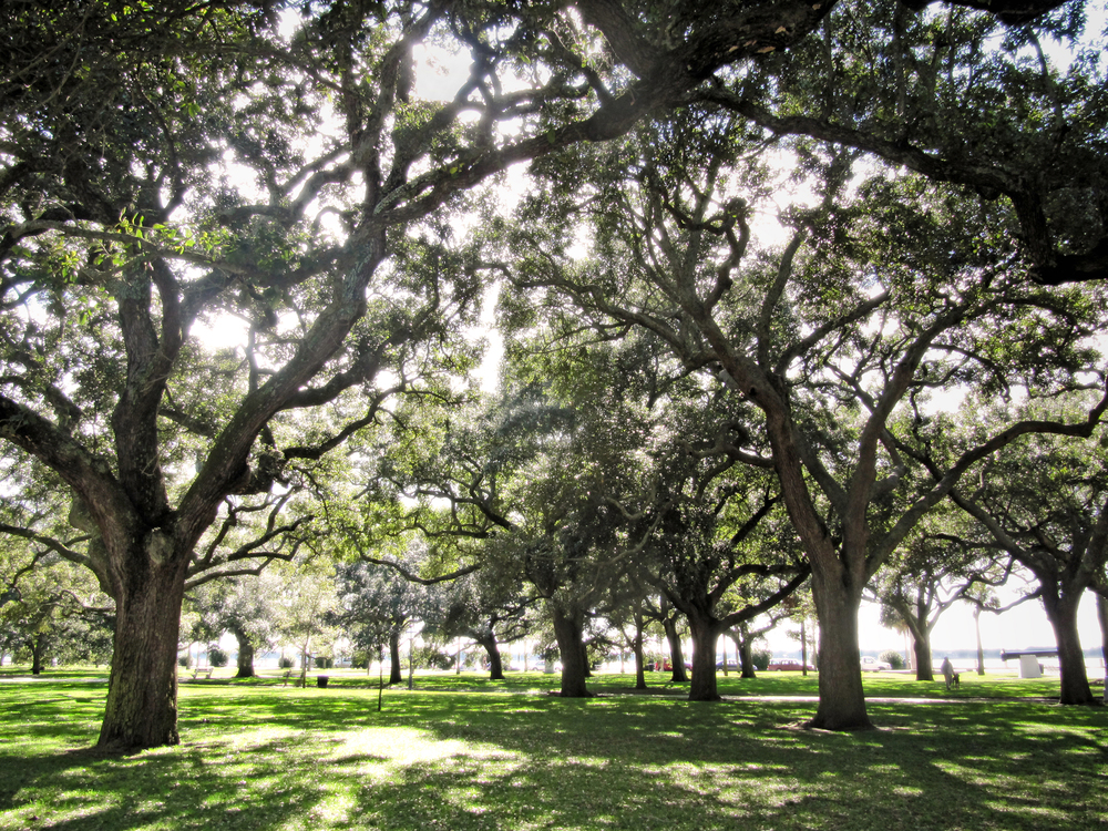 Battery Park in Charleston, SC.