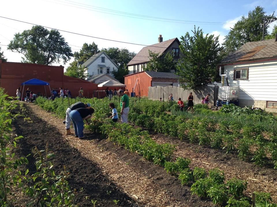 community farm 11.jpg