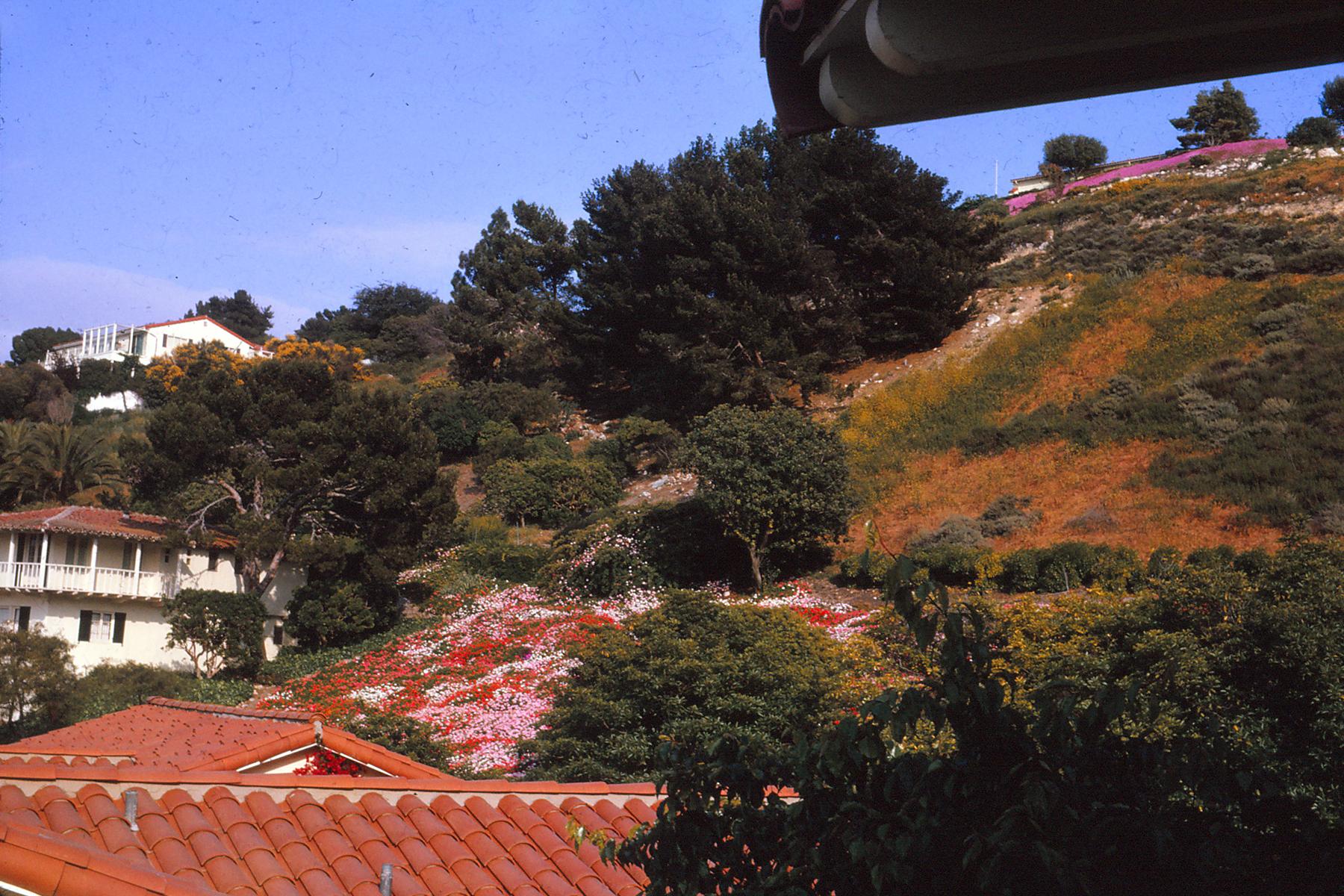 Palos Verdes 5