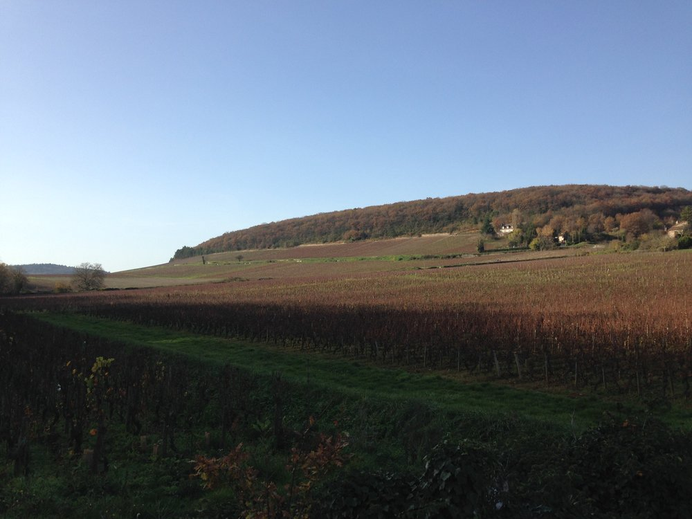 November 2015 - Voyage to Burgundy to visit old friends and