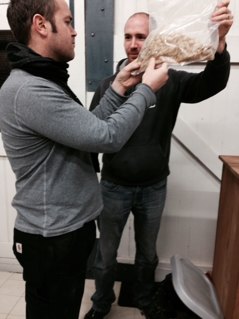 20th December 2015 - Anthony Baraff and Nick Malmquist during the brew inspecting some old hops (specifically chosen so as to deter the growth of undesirable bacteria but not inhibit lactic acid bacteria as a result of oxidation a alpha acids)