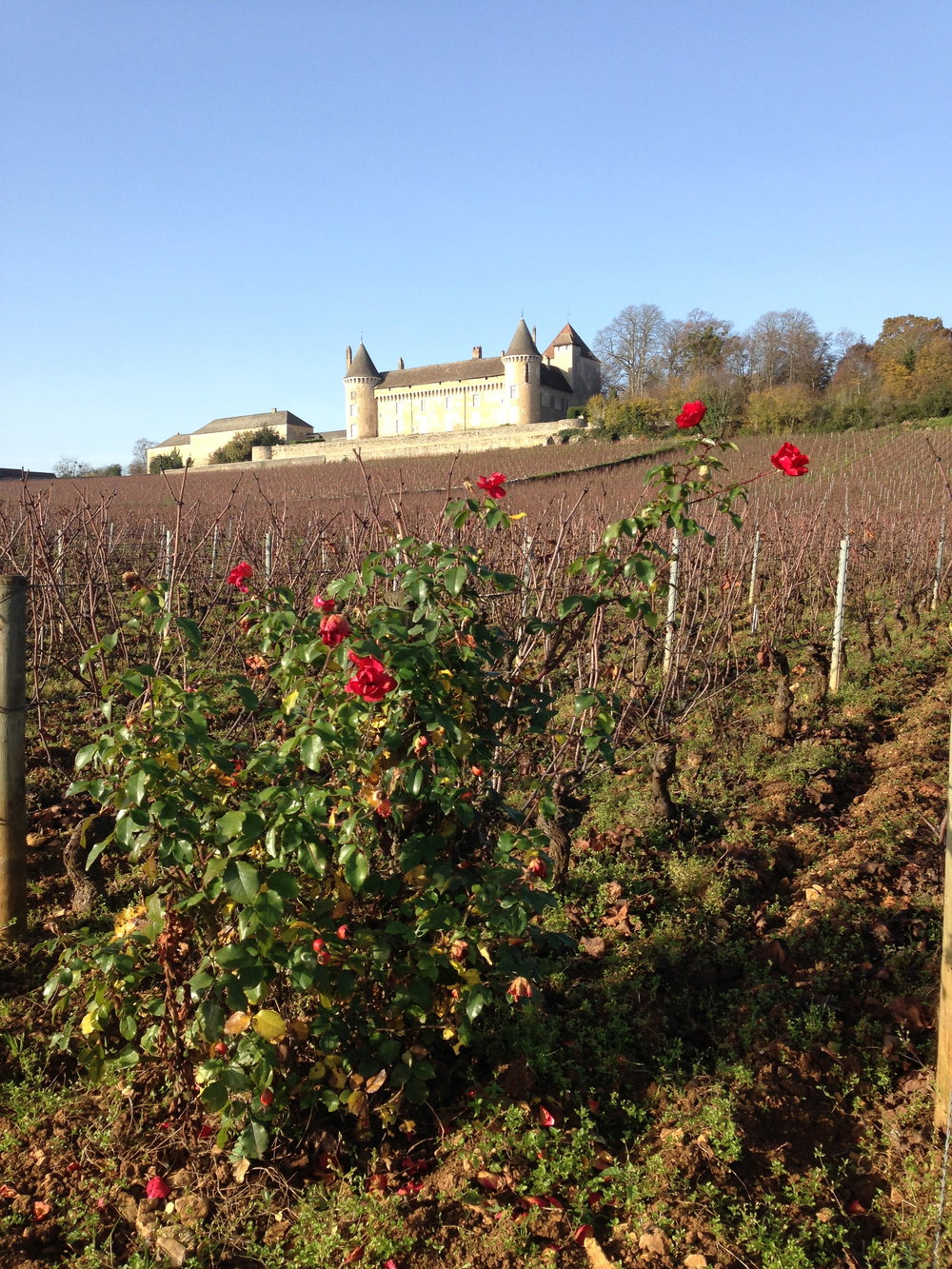 Burgundian vines in the autumn