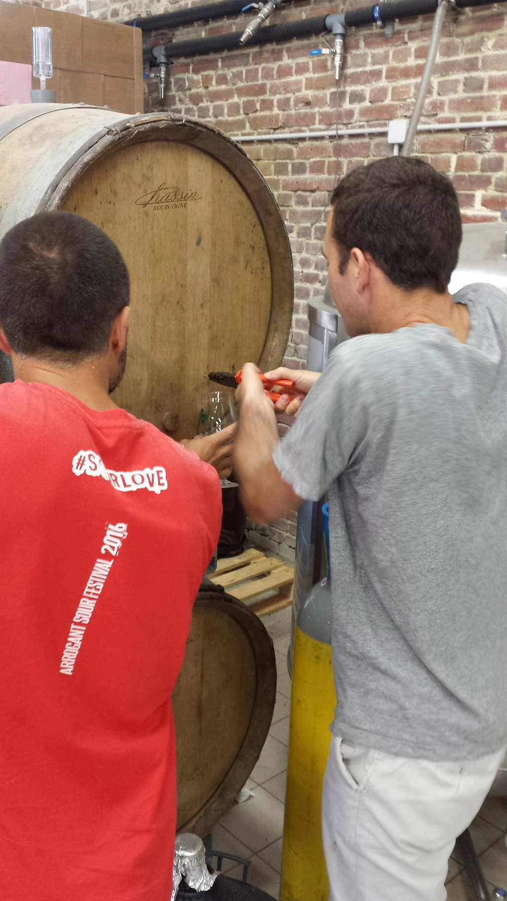 Pulling a sample from a cask infused with the same strain