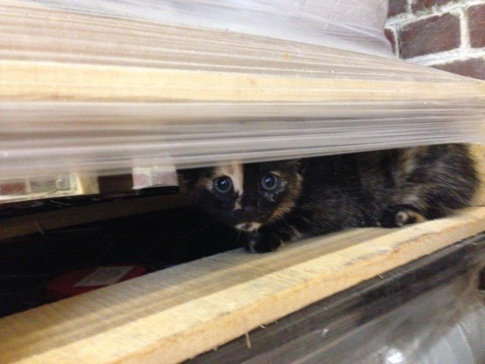 Tempête: chatton né à la brasserie