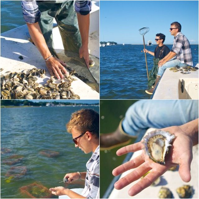 inahalfshell #tbt Visiting an oyster farm in Duxbury, MA last summer. Nothing quite like slurping an oyster straight from its native waters.