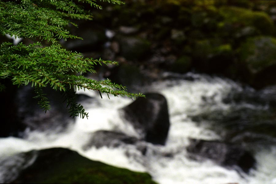Needles hanging above Oneonta Creek
