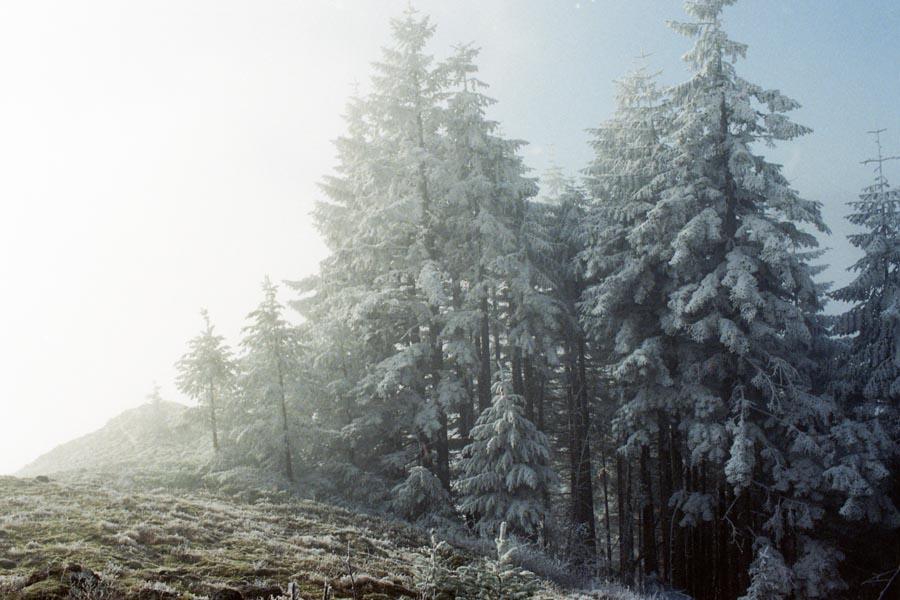 Forest, Frozen