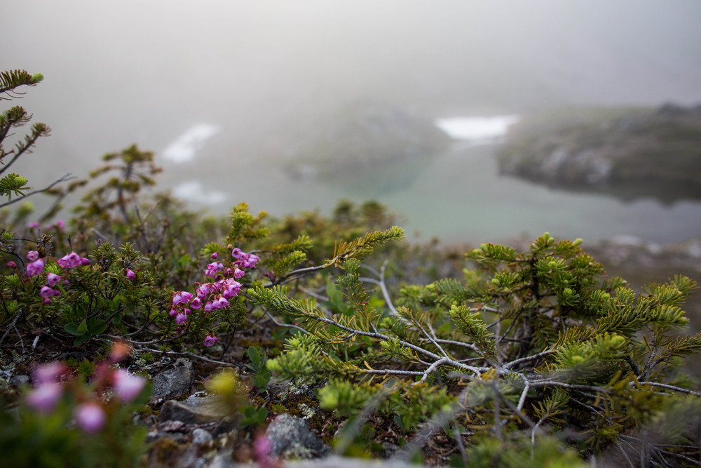 Flowers above a foggy Swimming Bear Lake