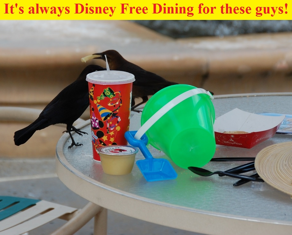 Free Dining Promotion at Disney World - Birds stealing french fries at Disney's Caribbean Beach Resort / Walt Disney World Resort - Florida.