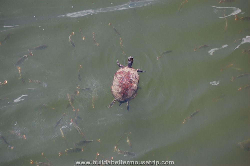 Pop Century Turtle