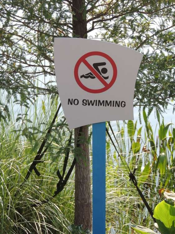 Art-of-Animation-910-No-Swimming-sign-by-the-lake-at-Disneys-Art-of-Animation-Resort-in-Florida.JPG