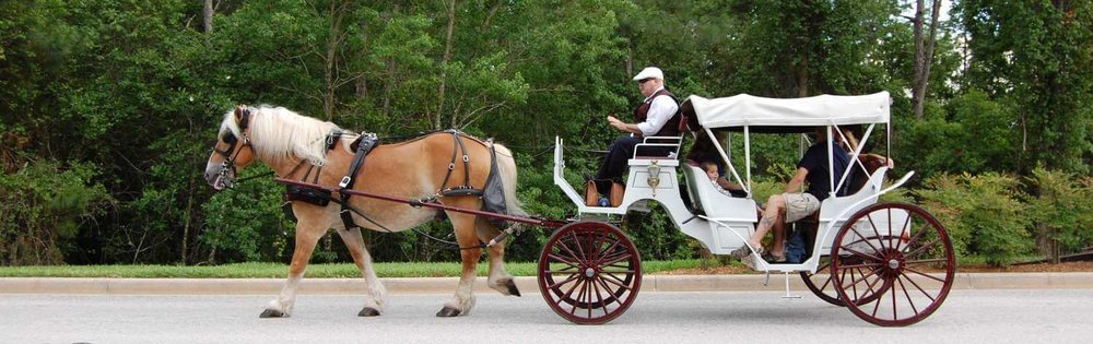 111-Disney's-Port-Orleans-Riverside-horse-carriages.JPG