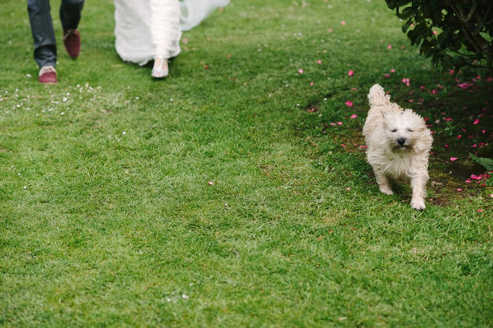 048 Dog wedding photobomb.jpg