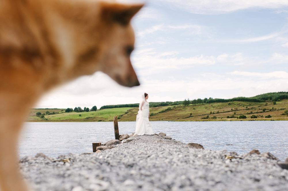 172 Wedding Photobomb dog.jpg