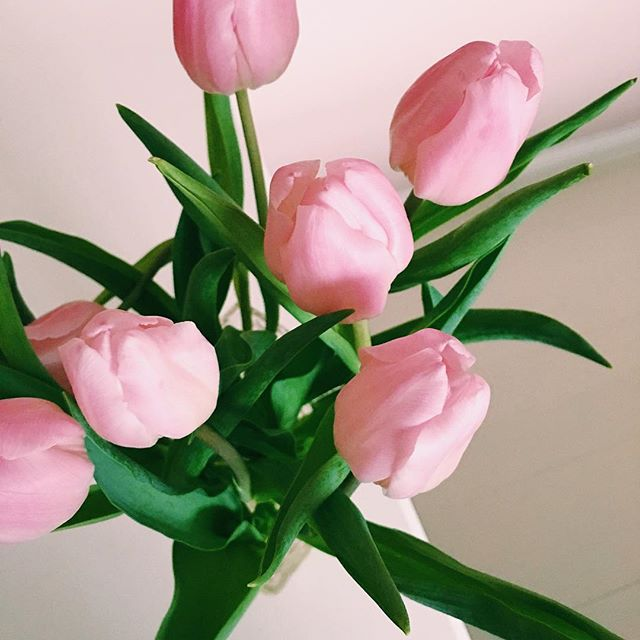 Tulips from my lovely mummy #home #pink #tulips #springisintheair