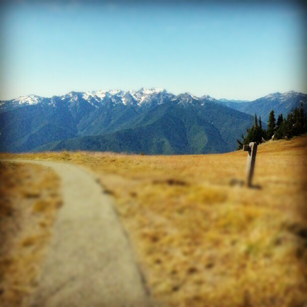 Great hike up Hurricane Hill, 6000ft. #6000ft #hurricaneridge #hurricanehill #hiking #outdoor #mountains #washington #trail #yellow #olympicnationalpark #path (Taken with Instagram at Hurricane Ridge)